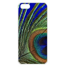 Peacock Feather Macro Peacock Bird Apple Iphone 5 Seamless Case (white)