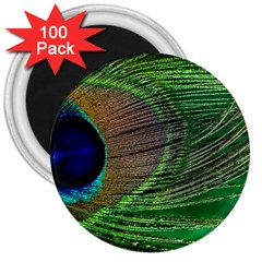 Peacock Feather Macro Peacock Bird 3  Magnets (100 Pack)