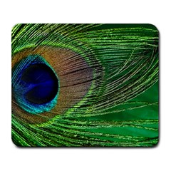 Peacock Feather Macro Peacock Bird Large Mousepads