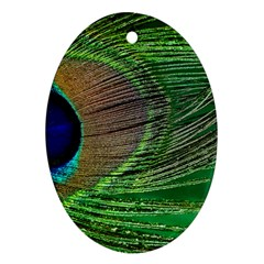 Peacock Feather Macro Peacock Bird Oval Ornament (two Sides)