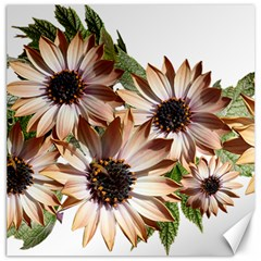 Sun Daisies Leaves Flowers Canvas 20  X 20  by Celenk