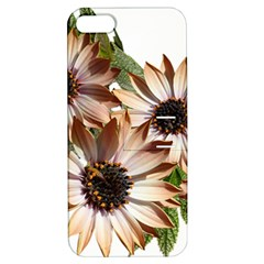 Sun Daisies Leaves Flowers Apple Iphone 5 Hardshell Case With Stand by Celenk