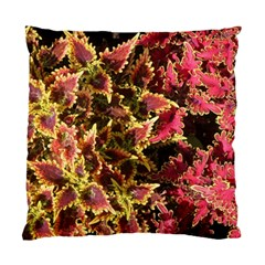 Plant Leaves Foliage Pattern Standard Cushion Case (two Sides) by Celenk