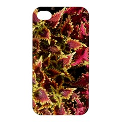 Plant Leaves Foliage Pattern Apple Iphone 4/4s Premium Hardshell Case by Celenk