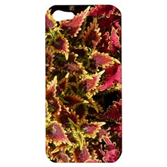 Plant Leaves Foliage Pattern Apple Iphone 5 Hardshell Case by Celenk