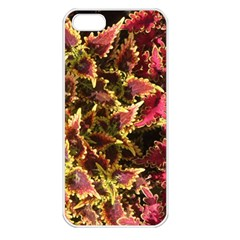 Plant Leaves Foliage Pattern Apple Iphone 5 Seamless Case (white) by Celenk