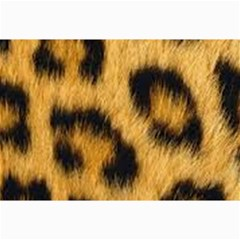 Animal Print Canvas 24  X 36  by NSGLOBALDESIGNS2