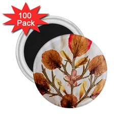 Holy Land Flowers 14 2 25  Magnets (100 Pack)