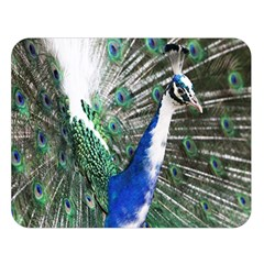 Animal Photography Peacock Bird Double Sided Flano Blanket (large)