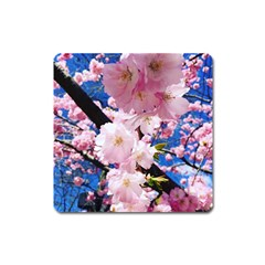 Flower Cherry Wood Tree Flowers Square Magnet