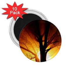 Rays Of Light Tree In Fog At Night 2 25  Magnets (10 Pack)  by Jojostore