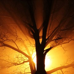 Rays Of Light Tree In Fog At Night Magic Photo Cube