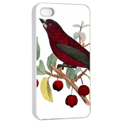 Bird On Branch Illustration Apple Iphone 4/4s Seamless Case (white) by Jojostore