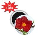 Deep Plumb Blossom 1.75  Magnets (10 pack)  Front