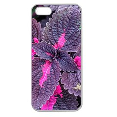 Beefsteak Plant Perilla Frutescens Apple Seamless Iphone 5 Case (clear)