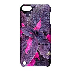 Beefsteak Plant Perilla Frutescens Apple Ipod Touch 5 Hardshell Case With Stand