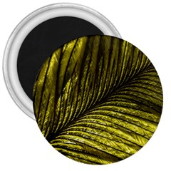 Feather Macro Bird Plumage Nature 3  Magnets by Sapixe