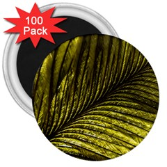 Feather Macro Bird Plumage Nature 3  Magnets (100 Pack) by Sapixe