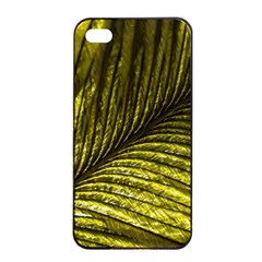 Feather Macro Bird Plumage Nature Apple Iphone 4/4s Seamless Case (black) by Sapixe