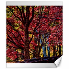 Autumn Colorful Nature Trees Canvas 20  X 24