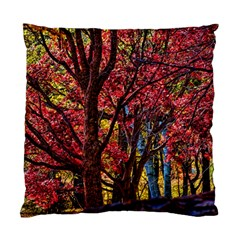 Autumn Colorful Nature Trees Standard Cushion Case (one Side) by Samandel