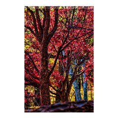 Autumn Colorful Nature Trees Shower Curtain 48  X 72  (small)
