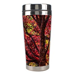 Autumn Colorful Nature Trees Stainless Steel Travel Tumblers