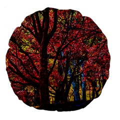 Autumn Colorful Nature Trees Large 18  Premium Flano Round Cushions