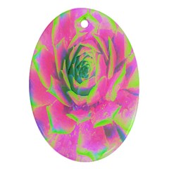 Lime Green And Pink Succulent Sedum Rosette Oval Ornament (two Sides)