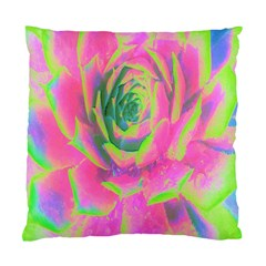 Lime Green And Pink Succulent Sedum Rosette Standard Cushion Case (two Sides) by myrubiogarden