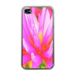 Fiery Hot Pink And Yellow Cactus Dahlia Flower Apple Iphone 4 Case (clear) by myrubiogarden