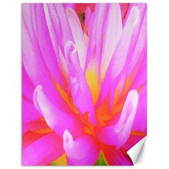 Fiery Hot Pink And Yellow Cactus Dahlia Flower Canvas 12  X 16  by myrubiogarden