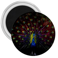 Beautiful Peacock Feather 3  Magnets