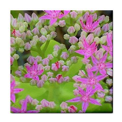 Hot Pink Succulent Sedum With Fleshy Green Leaves Tile Coasters by myrubiogarden
