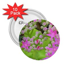 Hot Pink Succulent Sedum With Fleshy Green Leaves 2 25  Buttons (10 Pack)  by myrubiogarden