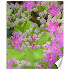 Hot Pink Succulent Sedum With Fleshy Green Leaves Canvas 8  X 10  by myrubiogarden