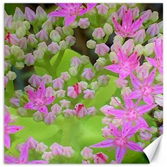 Hot Pink Succulent Sedum With Fleshy Green Leaves Canvas 12  X 12  by myrubiogarden