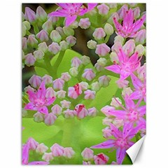 Hot Pink Succulent Sedum With Fleshy Green Leaves Canvas 12  X 16  by myrubiogarden