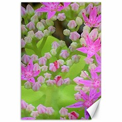 Hot Pink Succulent Sedum With Fleshy Green Leaves Canvas 12  X 18  by myrubiogarden