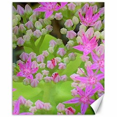 Hot Pink Succulent Sedum With Fleshy Green Leaves Canvas 16  X 20  by myrubiogarden