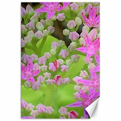 Hot Pink Succulent Sedum With Fleshy Green Leaves Canvas 20  X 30  by myrubiogarden