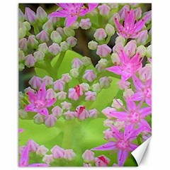 Hot Pink Succulent Sedum With Fleshy Green Leaves Canvas 11  X 14  by myrubiogarden