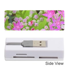 Hot Pink Succulent Sedum With Fleshy Green Leaves Memory Card Reader (stick) by myrubiogarden