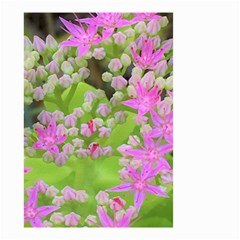 Hot Pink Succulent Sedum With Fleshy Green Leaves Small Garden Flag (two Sides) by myrubiogarden
