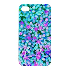 Blue And Hot Pink Succulent Sedum Flowers Detail Apple Iphone 4/4s Premium Hardshell Case