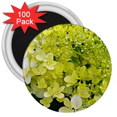 Elegant Chartreuse Green Limelight Hydrangea Macro 3  Magnets (100 Pack) by myrubiogarden