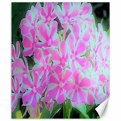 Hot Pink And White Peppermint Twist Garden Phlox Canvas 8  X 10  by myrubiogarden