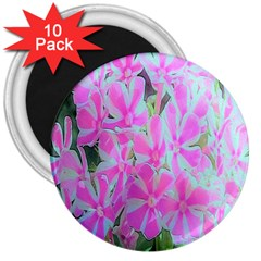 Hot Pink And White Peppermint Twist Garden Phlox 3  Magnets (10 Pack)