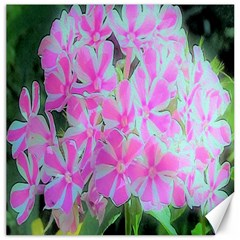 Hot Pink And White Peppermint Twist Garden Phlox Canvas 20  X 20
