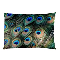 Peacock Feathers Bird Colorful Pillow Case